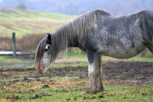 40 Pictures of Animals in Rain 28