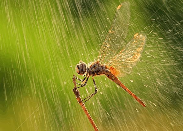 40 Pictures of Animals in Rain 3