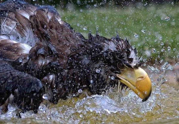 40 Pictures of Animals in Rain 31