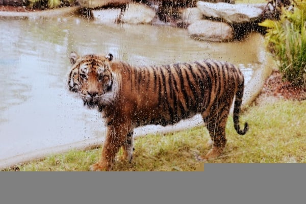 40 Pictures of Animals in Rain 32