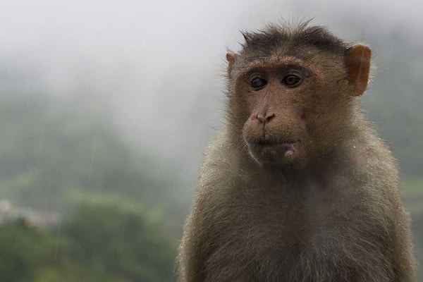 40 Pictures of Animals in Rain 37