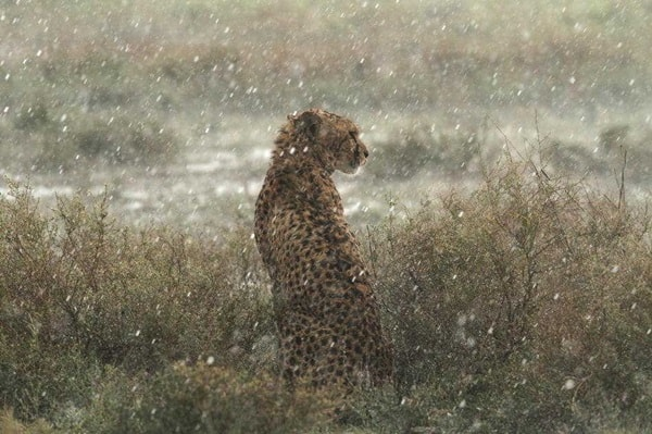 40 Pictures of Animals in Rain 38