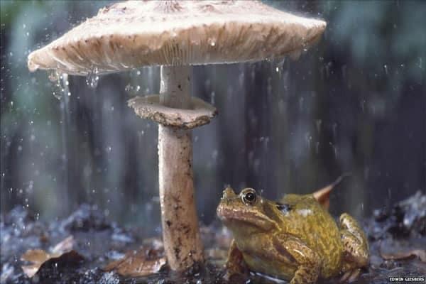 40 Pictures of Animals in Rain 39