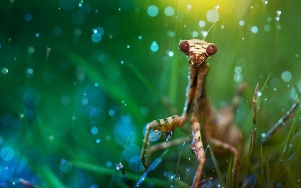 40 Pictures of Animals in Rain 4