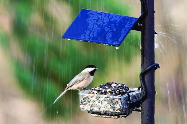 40 Pictures of Animals in Rain 40