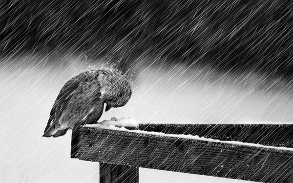 40 Pictures of Animals in Rain 5