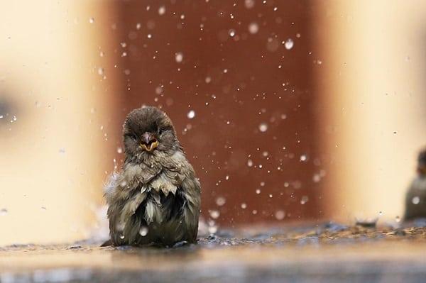 40 Pictures of Animals in Rain 6