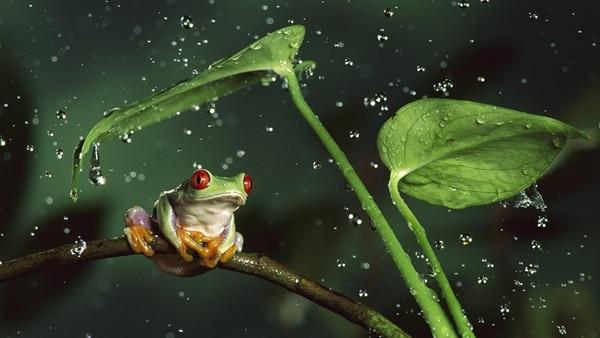 40 Pictures of Animals in Rain 7