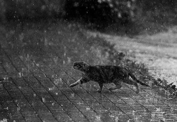 40 Pictures of Animals in Rain 8