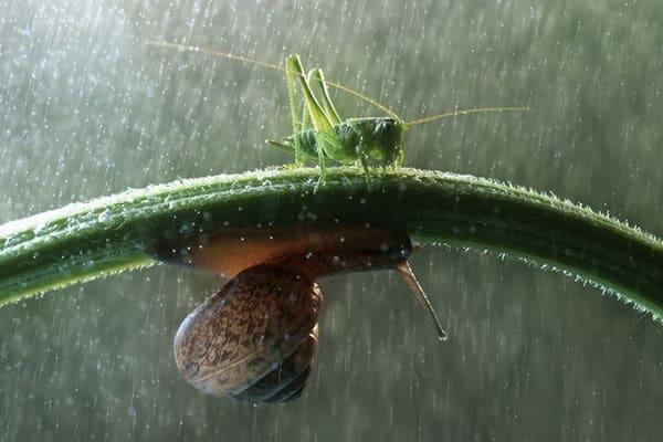 40 Pictures of Animals in Rain 9