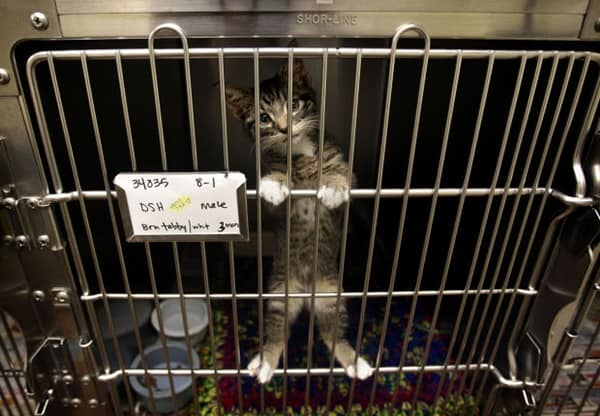 40 Pictures of Animals in Shelter 21