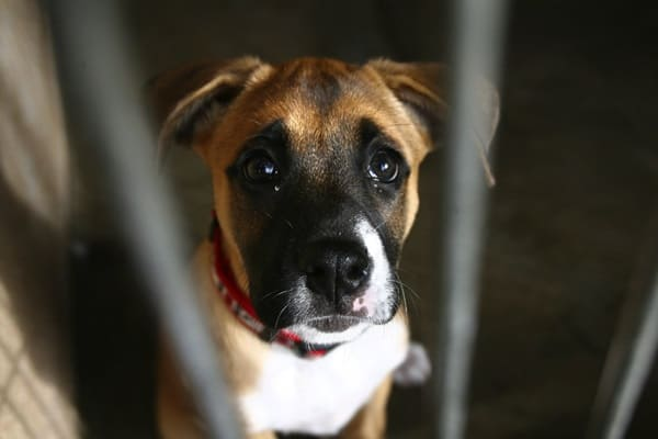 40 Pictures of Animals in Shelter 29