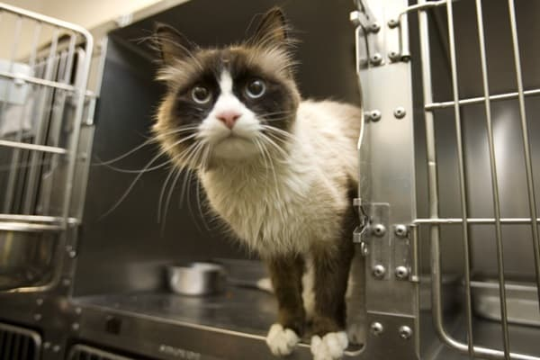 40 Pictures of Animals in Shelter 31