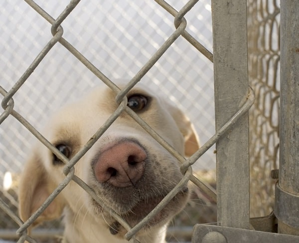 40 Pictures of Animals in Shelter 6