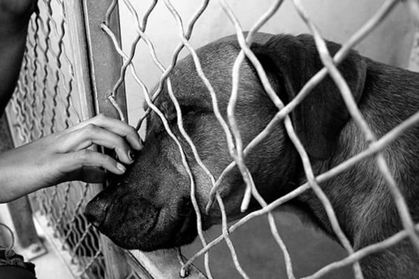 40 Pictures of Animals in Shelter 9