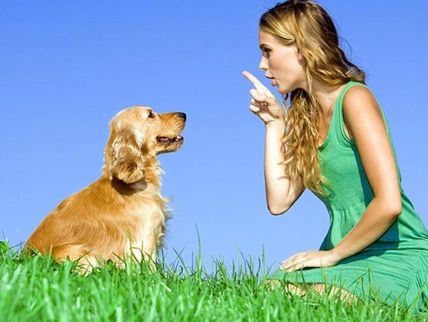 Best Tips to Stop Dog Barking 1