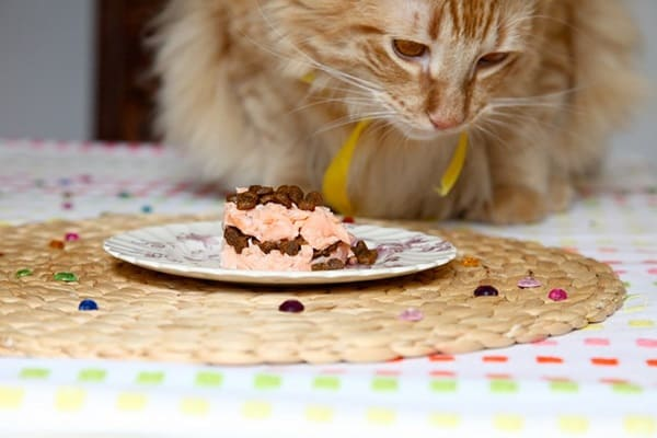 Astonishing How To Make A Birthday Cake For Cats Easy Recipe Personalised Birthday Cards Arneslily Jamesorg