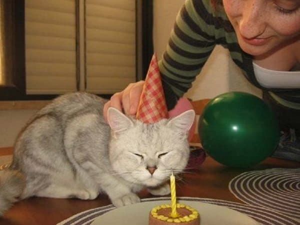 So You Can Help Your Cat With That Break Cake To Make Small Pieces Pet Bite And Chew It Comfortably
