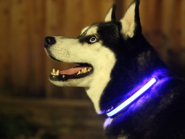 10 Gadgets for the Pet Loving Owners 1