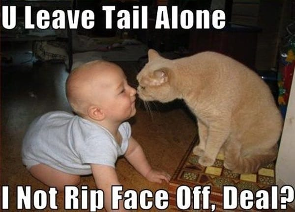 40 Amazing Cat Funny Moment Pictures 13