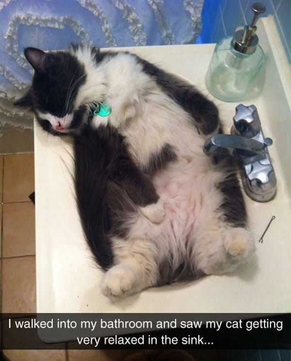 40 Amazing Cat Funny Moment Pictures 30