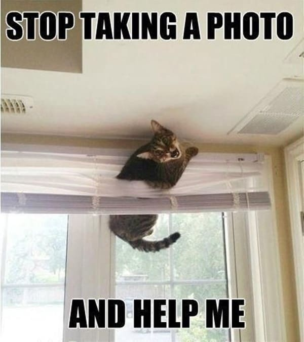 40 Amazing Cat Funny Moment Pictures 7