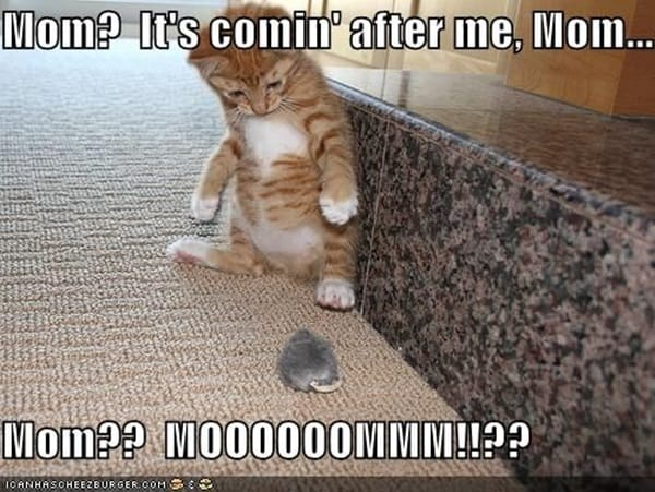 40 Amazing Cat Funny Moment Pictures 9