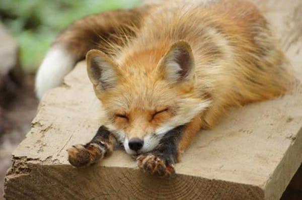 cute foxes
