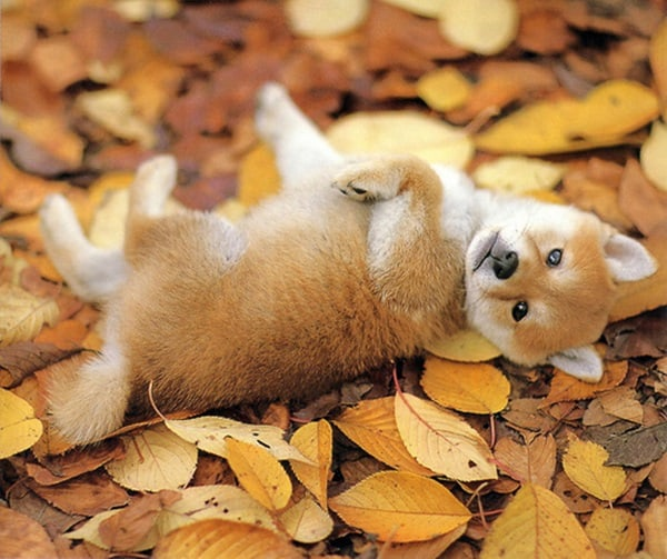 40 Cute Fox Pictures 30