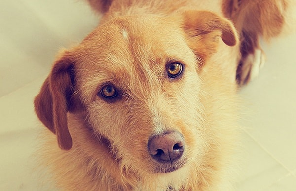 5 Things you Should Never do When Training your Dog 2