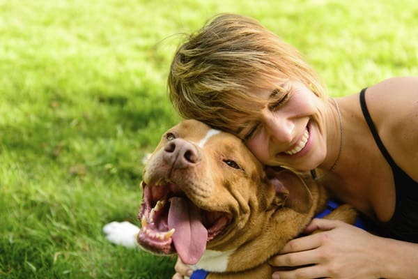 5 Things you Should Never do When Training your Dog 4