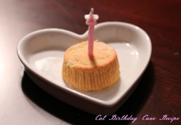 Birthday Cake Recipes For Your Cats 1