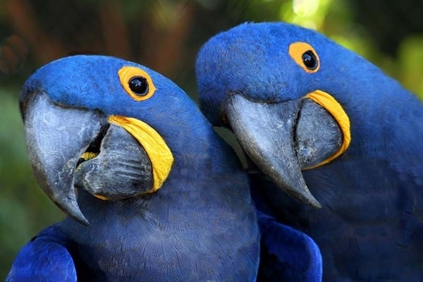 Check Out the Facts About the Most Expensive Parrot in the World 2