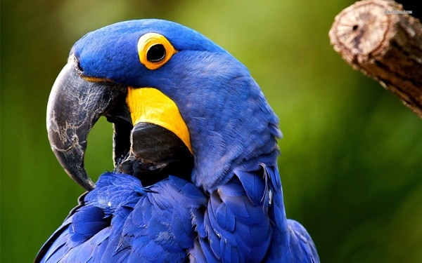 Check Out the Facts About the Most Expensive Parrot in the World 5