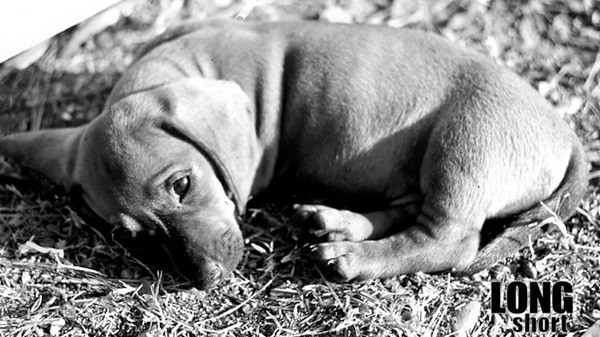 Cute and Amazing Dachshund Pictures (14)