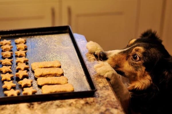 How to Make Christmas Cookies for your Dog 5