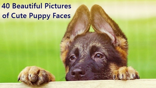 puppy_face_ears_cute_40208_1920x1080