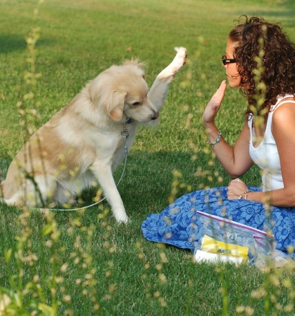 10 Useful and Easy Dog Obedience Training Tips 10