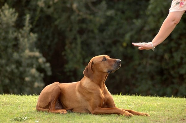 10 Useful and Easy Dog Obedience Training Tips 2