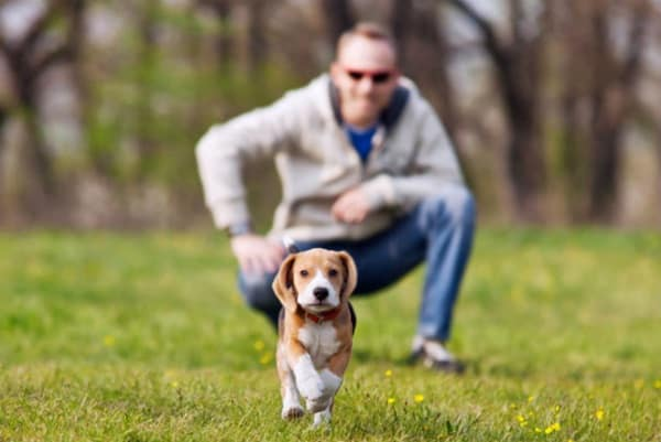 10 Useful and Easy Dog Obedience Training Tips 4