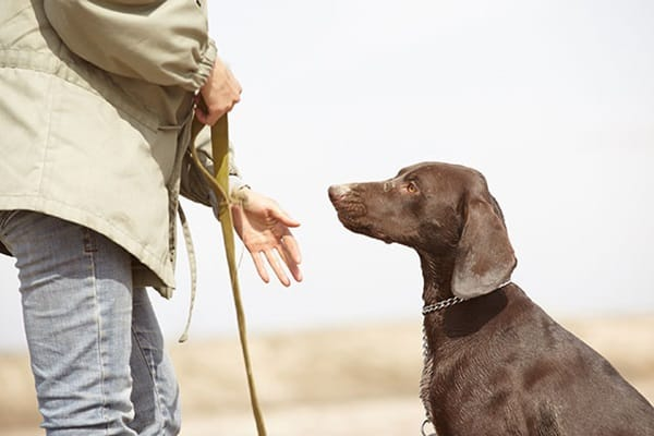 10 Useful and Easy Dog Obedience Training Tips 5