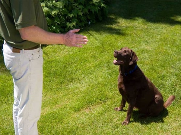 10 Useful and Easy Dog Obedience Training Tips 8