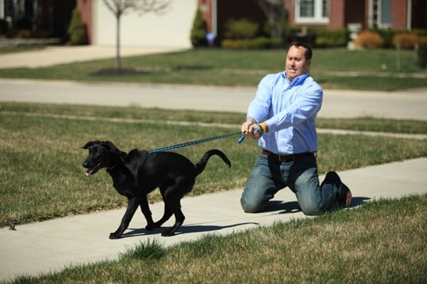 When To Start Dog Obedience Training