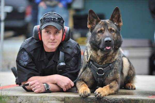 20 Cute and Intellegent Police Dog Moves Captured 1