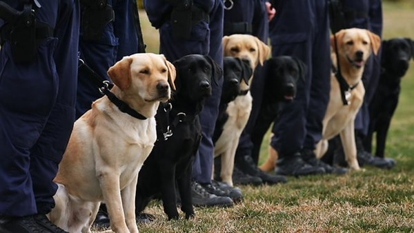 20 Cute and Intellegent Police Dog Moves Captured 13