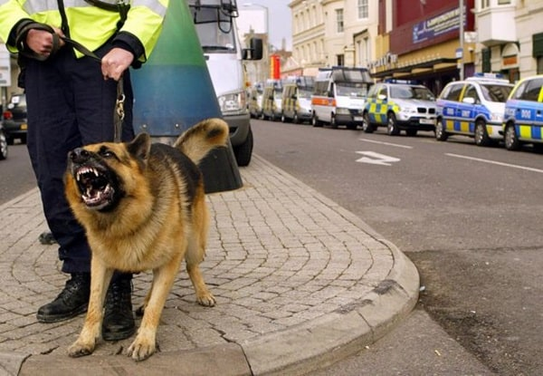 20 Cute and Intellegent Police Dog Moves Captured 19