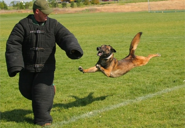 20 Cute and Intellegent Police Dog Moves Captured 20
