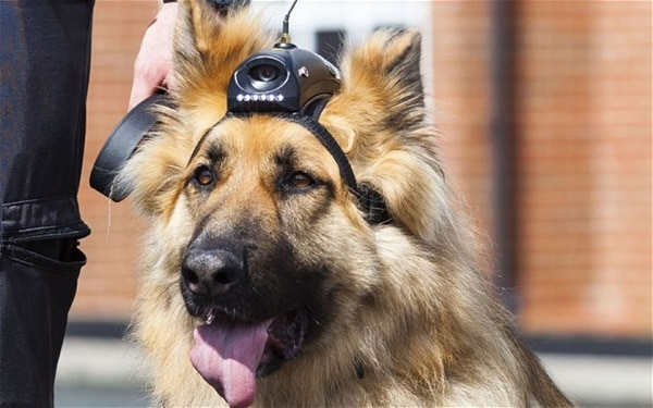 20 Cute and Intellegent Police Dog Moves Captured 8