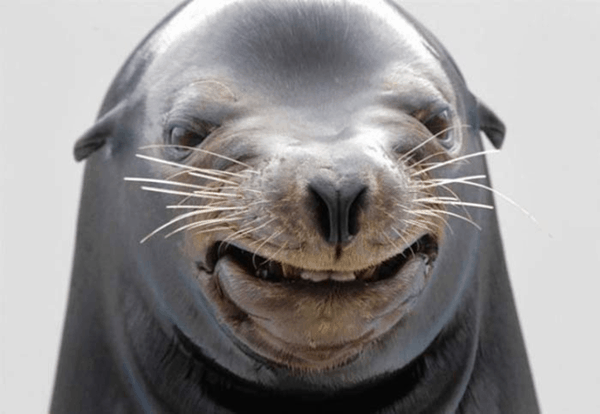 40 Awkward Animal Moments Pictures 20