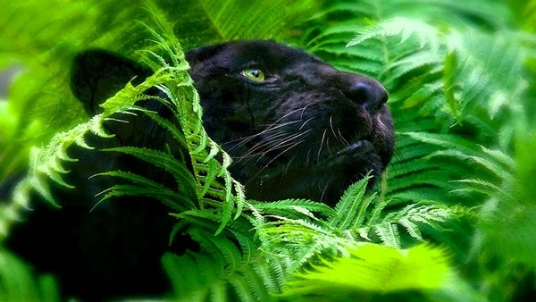 40 Beautiful Animal Pictures in the Rainforest 15